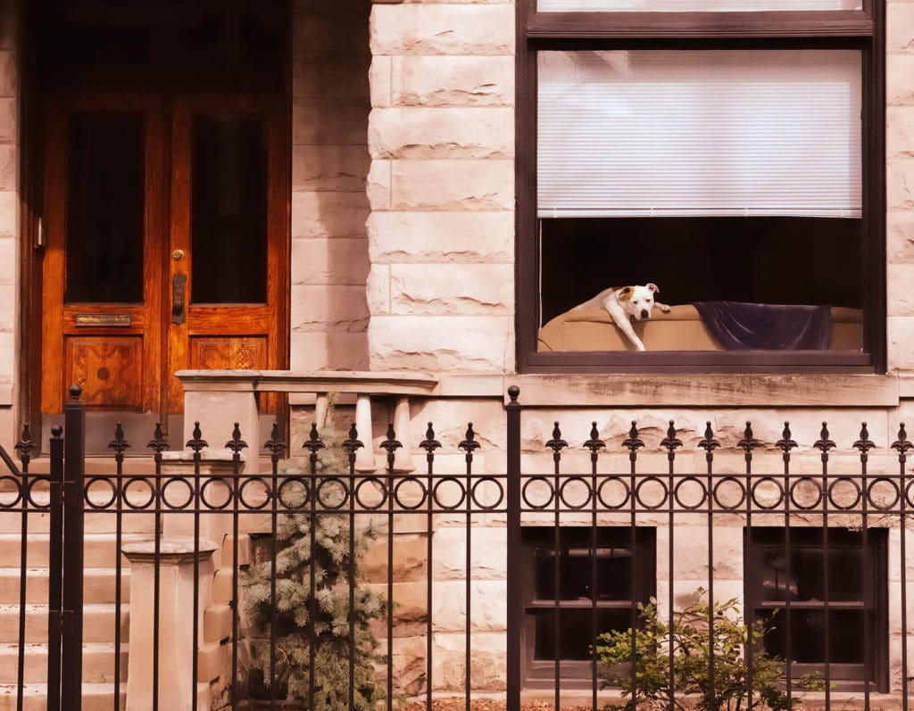 dog in the window of a chicago two flat